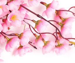 巴黎国际学校喜庆新春活动