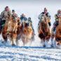 雪原赛驼 Compétition à chameau sur la prairie enneigée