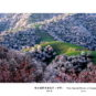 吐尔根野杏林花开 Amandiers sauvages de Tuergen en fleurs (Yili)