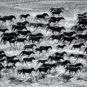 和平-草原画卷-内蒙古锡锡林郭勒盟 Paysage de prairie (ligue de Xilin Gol, Mongolie-intérieure)