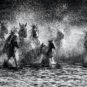 和平-神马踏浪-内蒙古锡林郭勒盟摄影 Chevaux divins chevaucahnt les vagues (ligue de Xilin Gol, Mongolie-intérieure)