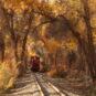 10.巴音郭楞蒙古自治州-胡杨林公园森林小火车 Préfecture autonome mongole de Bayin'gholin – Petit train dans le parc forestier des peupliers de l'Euphrate