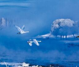 美丽中国·冰雪之旅 系列微短视频展播