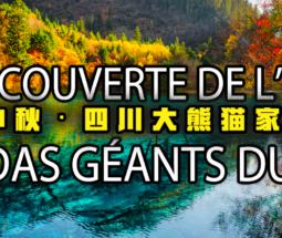 四川熊猫家园之旅
